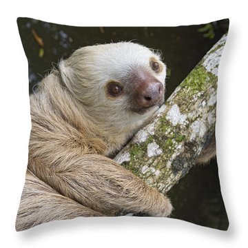Hoffmanns Two-toed Sloth Costa Rica Throw Pillow by Suzi Eszterhas