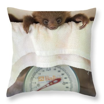 Hoffmanns Two-toed Sloth Orphan Throw Pillow by Suzi Eszterhas