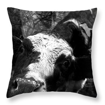 Inquisitive Zoey With Ellamay Throw Pillow by Danielle Summa