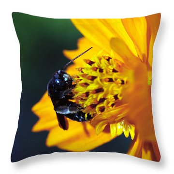 Insect And The Wild One Throw Pillow by Wanda Brandon