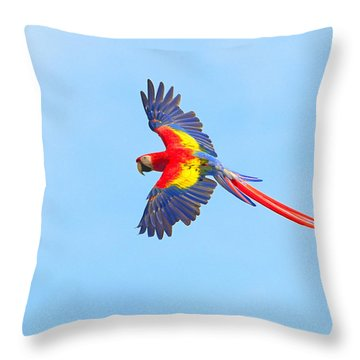 Into The Blue Throw Pillow by Tony Beck