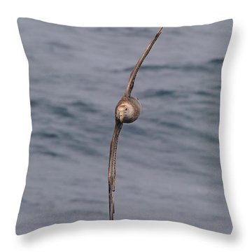 Into The Wind Throw Pillow by Tony Beck