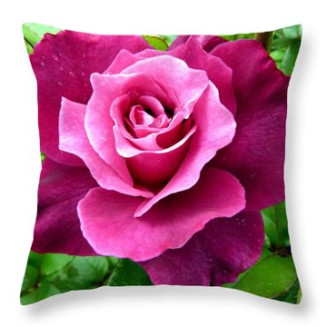 Intrigue Rose Throw Pillow by Will Borden