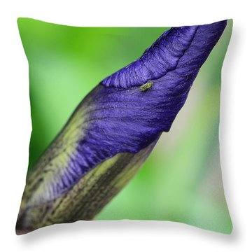 Iris And Friend Throw Pillow by Lisa Phillips