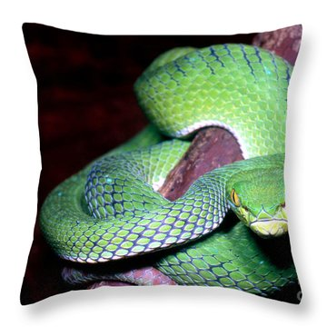 Island Pit Viper Throw Pillow by Dante Fenolio