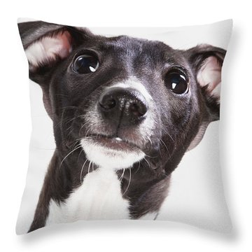 Italian Greyhound Puppy Spruce Grove Throw Pillow by Leah Bignell