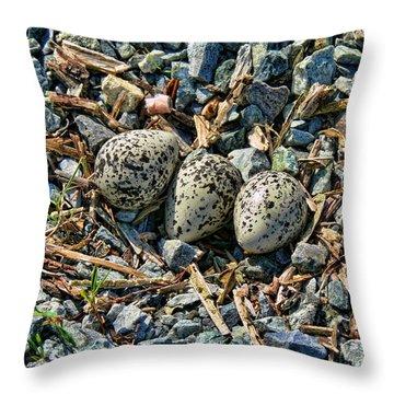 Killdeer Bird Eggs Throw Pillow by Jennie Marie Schell