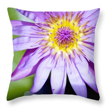 Lavendar Water Lily Throw Pillow by Kicka Witte