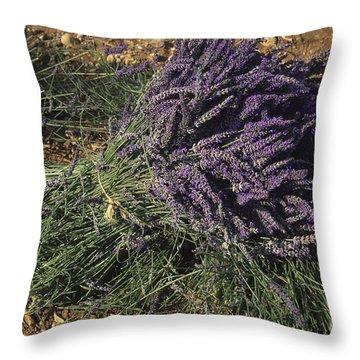 Lavender Throw Pillow by Bernard Jaubert