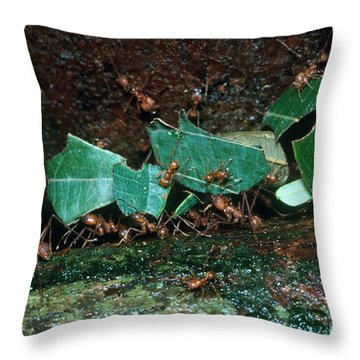 Leafcutter Ants Throw Pillow by Gregory G. Dimijian