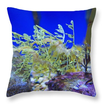 Leafy Seadragon Phycodurus Eques At The Throw Pillow by Stuart Westmorland