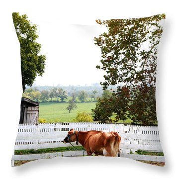 Little Jersey Cow Throw Pillow by Stephanie Frey