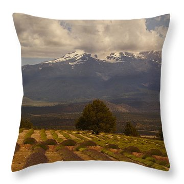 Lone Tree And Lavender Fields Throw Pillow by Mick Anderson