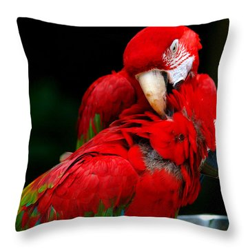 Macaws Throw Pillow by Paul Ge
