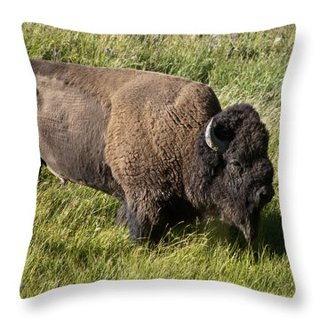 Male Bison Grazing  Throw Pillow by Paul Cannon