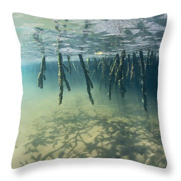 Mangrove Tree Roots Cast Shadows Throw Pillow by Nick Caloyianis