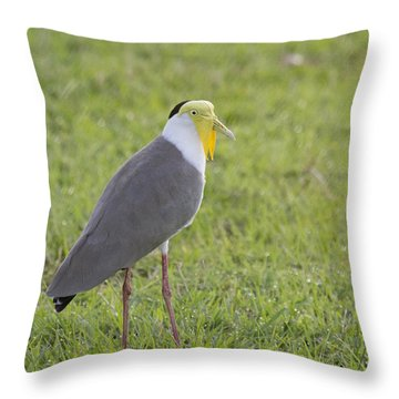 Masked Lapwing Throw Pillow by Douglas Barnard