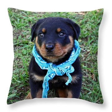 Maxx Throw Pillow by Rebecca Morgan