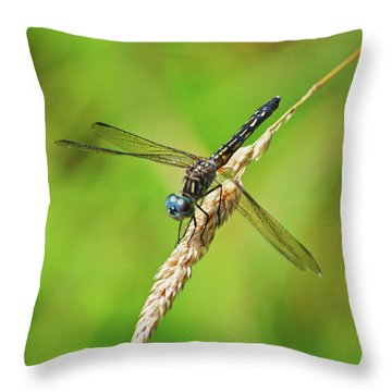 Throw Pillow featuring the photograph Meadowhawk by Rodney Campbell