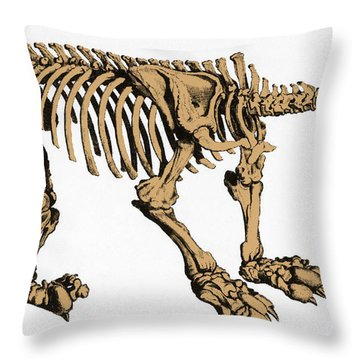 Megatherium, Extinct Ground Sloth Throw Pillow by Science Source