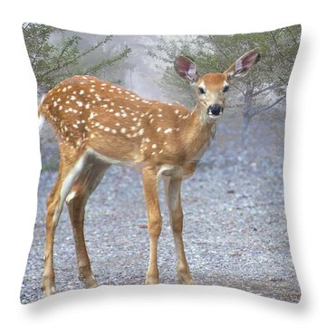 Misty Fawn Throw Pillow by Marty Koch