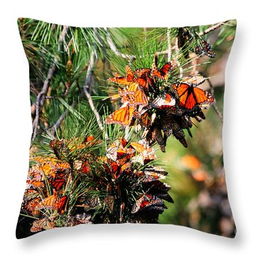 Monarch Butterfly Gathering Throw Pillow by Tap  On Photo