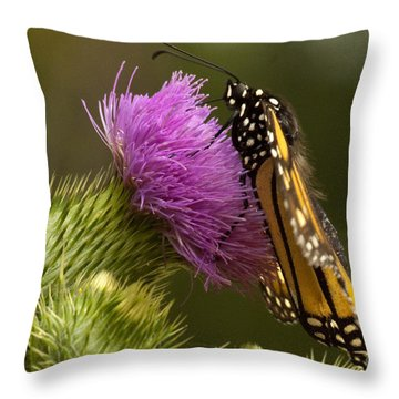 Monarch Thistle Munching Throw Pillow by Darleen Stry