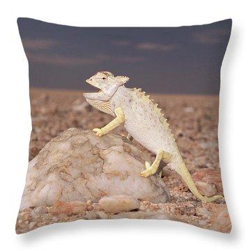 Namaqua Chameleon Chamaeleo Namaquensis Throw Pillow by Michael & Patricia Fogden