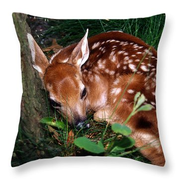 Nature's Precious Creation Throw Pillow by Skip Willits