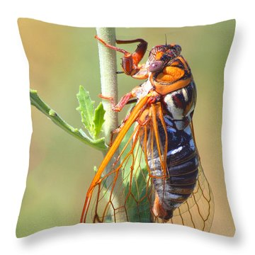Noisy Cicada Throw Pillow by Shane Bechler