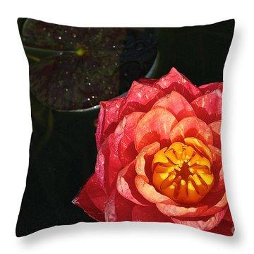 Nymphaea Throw Pillow by Susan Herber