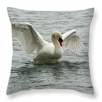 On The Wings Of A Swan Throw Pillow by Inspired Nature Photography Fine Art Photography