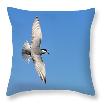 One Good Tern Deserves Another Throw Pillow by Tony Beck