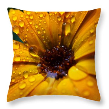 Orange Daisy In The Rain Throw Pillow by Thomas R Fletcher