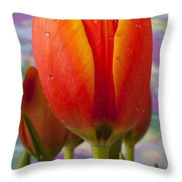Orange Tulip Close Up Throw Pillow by Garry Gay