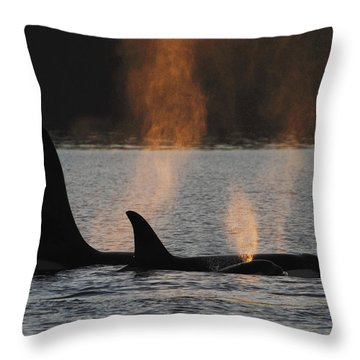 Orca Orcinus Orca Resident Pod Throw Pillow by Hiroya Minakuchi