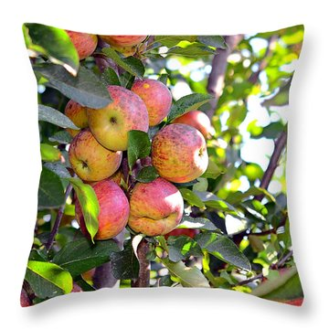 Organic Apples In A Tree Throw Pillow by Susan Leggett