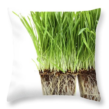 Organic Wheat Grass On White Throw Pillow by Sandra Cunningham
