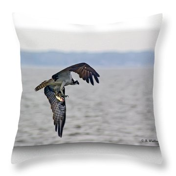 Osprey Grab Throw Pillow by Brian Wallace