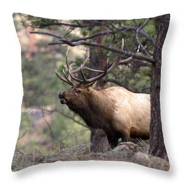 Out Of The Trees Throw Pillow by Anne Rodkin