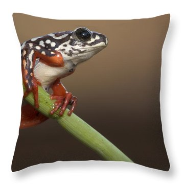 Painted Reed Frog Botswana Throw Pillow by Piotr Naskrecki