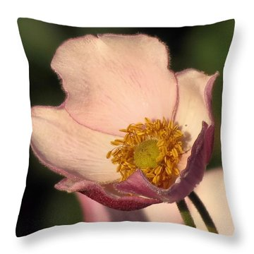 Pale Throw Pillow by Janice Drew