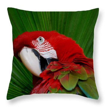 Parrot Head Throw Pillow by Skip Willits