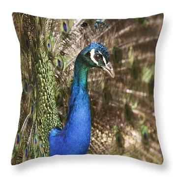 Peacock Display Throw Pillow by Richard Garvey-Williams