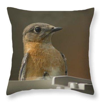 Peeping Bluebird Throw Pillow by Kathy Clark