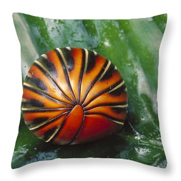 Pill Millipede Glomeris Sp Rolled Throw Pillow by Cyril Ruoso