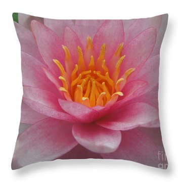 Pink Water Lily Throw Pillow by Renee Trenholm