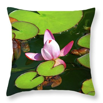Polish Beauty Throw Pillow by Mariola Bitner