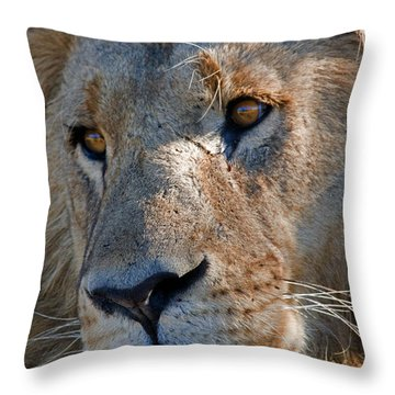 Portrait Of A Male African Lion Throw Pillow by Beverly Joubert