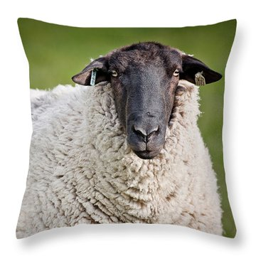 Portrait Of A Sheep Throw Pillow by Greg Nyquist